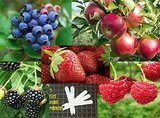 Jays Seeds Berries and Apple Fruit Combo Pack